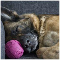 Natural drug-free dog calming products. #dog