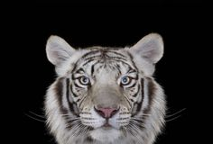 http://www.fubiz.net/2015/06/24/portraits-of-exotic-animals/