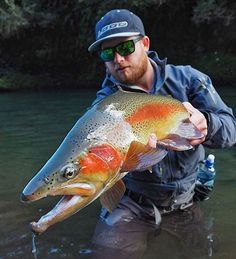 Outrageous! @trouthuntingnz @fresh.tides  #newzealand #trout #rainbow #fishing #flyfishing #monsters