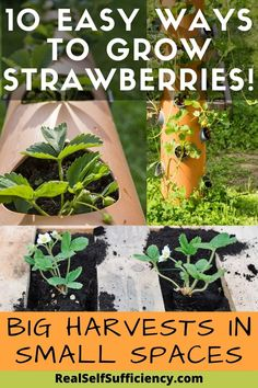 Check out our 10 easy DIY ways to grow strawberries! Try strawberry pallet gardens, vertical planters and more. Maximize your harvests! #growstrawberries #organicgardening #verticalgardens