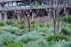 Viburnum x bodnantense 'Dawn' in the woodland area, Beech Gardens at The Barbican, with Luzula nivea and Luzula sylvatica ground layer - Jan 31 Sensory Garden, Barbican, Woodland Garden, Plant Design, Garden Plants, Landscape, Nature, Planting, Gardening