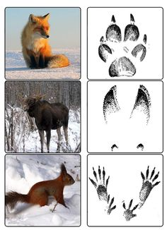Animal Activities For Kids, Science Projects For Kids, Science Experiments Kids, Science For Kids, Science And Nature, Forest Animal Crafts, Forest Animals, Animal Footprints, Animal Tracks