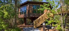 disney Saratoga Springs, tree house vacation..I'm trying to convince the hubby this is where we are going to stay