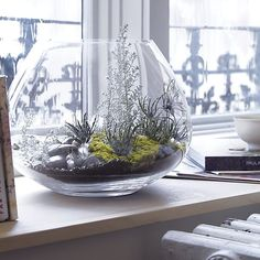 Cape Vase in Vases | Crate and Barrel --I absolutely adore this as a terrarium!--aw--