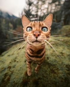 Some of the animals I've run into on my travels 😛 The Animals, Funny Animals, Cute Kittens, Cats And Kittens, Amstaff Puppy, Cat Photography, Beautiful Cats, Cat Breeds, Cat Memes