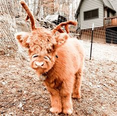Cute Baby Cow, Baby Animals Super Cute, Cute Cows, Cute Little Animals, Cute Funny Animals, Cow Pictures, Baby Animals Pictures, Cute Animal Photos, Baby Farm Animals
