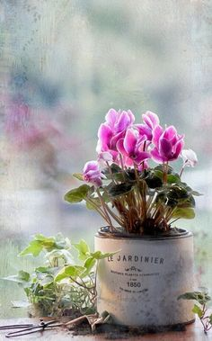 Beautiful Flowers via Ana Rosa Rustic Flowers, My Flower, Flower Pots, Beautiful Flowers, Beautiful Images, Deco Floral, Spring Flowers, Garden Inspiration, Beautiful Gardens