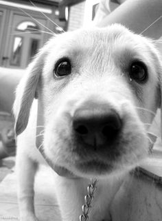 cachorriiiinho