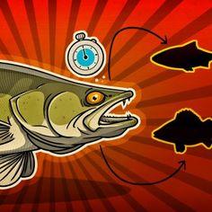 Raubfisch  Streamer mit stinger Baitfish Hecht Huchen Zander Fliege