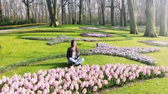 Tulips garden  by maialenmr