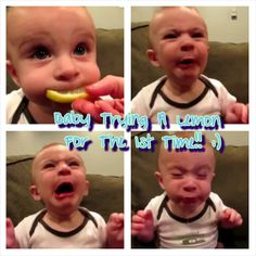 Baby trying a lemon for the first time! Lemon On Face, I Laughed, Picture Video, Feel Good, First Time, Cute Babies, Laughter, Funny Pictures, Hilarious