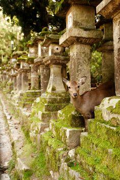 Nara, Japan, The Cherry Blossom Girl