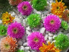 Beautiful Flowers In The World Wallpaper Beautiful flow