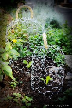 Chicken Wire Cloches ~ More often than not, necessity is the mother of garden projects. Case in point: these adorable chicken wire cloches are an easy craft project to protect tender garden plants. Garden Crafts, Garden Projects, Garden Art, Craft Projects, Garden Ideas, Potager Bio, Plantation, Edible Garden, Dream Garden