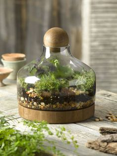 Glass & Wood Terrarium, Large | Gardener's Supply