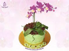 Orchid in a pot - orchid in a pot, purple orchid,