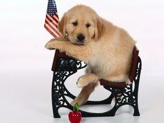 Dogs - Honden Wallpapers en Desktop Achtergronden