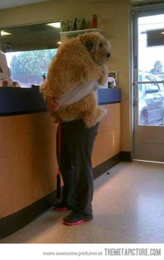 "Big Puppy - Either: ""I don't feel good... Please HOLD me""  OR:  But, but, but I don't NEED any shots!!!!!!!!!!!"