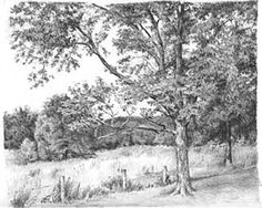 Graphite Pencil Drawings by Diane Wright