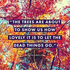 Pay Attention To Fall, Beloveds.