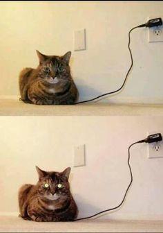 Charged up kittie kittie