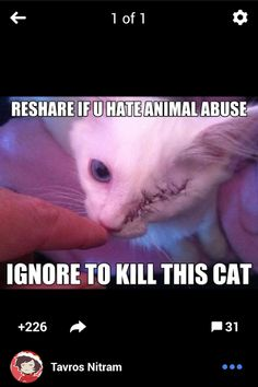 i dont want to kill a cat