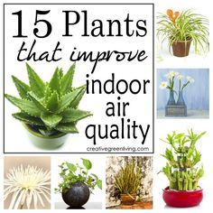 Did you know that specific kinds of plants can improve the quality of the air in your home?