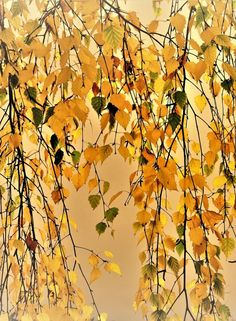 Autumn leaves by Yichun Zhang on 500px