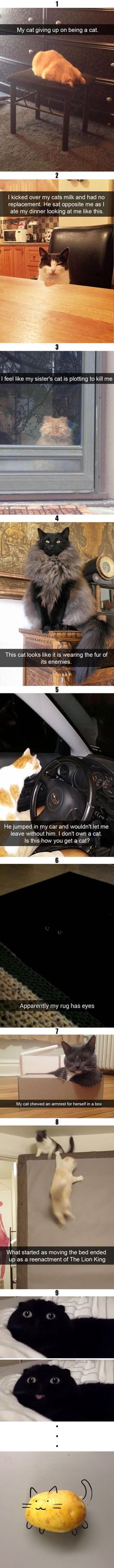 35 Funny cat memes with pictures that feature funny captions and remarks supplied by humans. Scanning for a laugh? Get a looks at these funny cat memes that deal among all kinds of funny topics. Funny Animal Memes, Cute Funny Animals, Funny Animal Pictures, Cute Baby Animals, Funny Cute, Cute Cats, Funny Memes, Hilarious, Memes Humor
