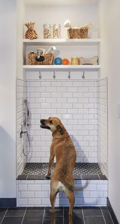 dog shower in laundry room utility sink & dog shower in laundry room ; dog shower in laundry room diy ; dog shower in laundry room garage ; dog shower in laundry room ideas ; dog shower in laundry room built ins ; dog shower in laundry room utility sink Mudroom Laundry Room, Laundry Room Design, Dog Room Design, Laundry Area, Small Laundry, Dog Washing Station, Dog Station, Laundry Station, Dog Rooms