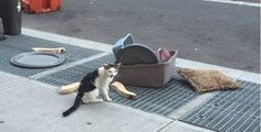 Poor cat found crying for help next to his litter box and belongings after he was thrown onto streets. A street sweeper who was on the job in Brooklyn stumbled upon an unusual sight. A lovely kitten was thrown in the middle of the street with a box… Rare Cat Breeds, Rare Cats, Funny Cat Videos, Funny Cats, Funny Animals, Cat Stands, Cats For Sale, Dog Games, Old Cats