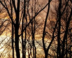 Last rays Trees, Tree Structure, Wood