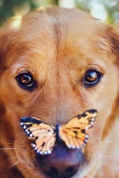 butterfly on dog ♡... Re-pin by StoneArtUSA.com ~ affordable custom pet memorials for everyone.