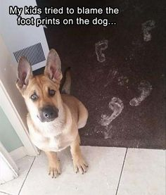 footprints-on-the-dog funny pictures with captions pictures funny