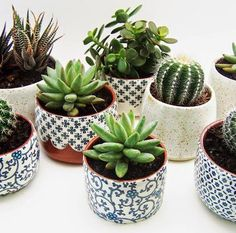 little potted plants