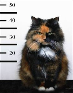 when cats go bad...