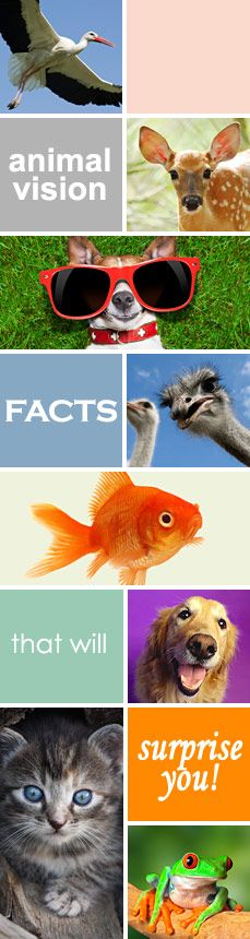 Slideshow and Quiz: Surprising Animal Vision Facts