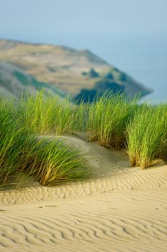 Dead Dunes - Curonian Spit and Lagoon, Lithuania.  A Unesco heritage site by Julius Kielaitis