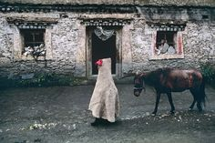 All Creatures Great and Small | Steve McCurry Tibet