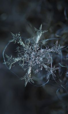 Starlight | Alexey Kljatov | As fascinating as macro photography is, most of us think we can't do it because it requires specialized equipment. Alexey, however, is an inspiration to aspiring amateur photographers everywhere -he created a home-made rig capable of capturing stunning close-up pictures of snowflakes out of old camera parts, boards, screws and tape. His pictures give us an enchanting close-up view of snowflakes that we could never hope for without specialized equipment.: