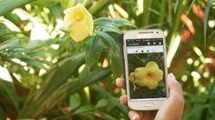 3 APLICACIONES PARA IDENTIFICAR PLANTAS DESDE TU MÓVIL   #Medioambiente #Tecnología #Educación #Ecología #Actualidad #Technology #Education #Ecology #News #Tips   http://www.ideasverdes.es/3-aplicaciones-para-identificar-plantas-desde-el-movil/