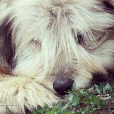 Carpathian Mountains, Shepherd Dog, All Dogs, Livestock, Romania, Best Friends, Angels, Cute Animals, Heaven
