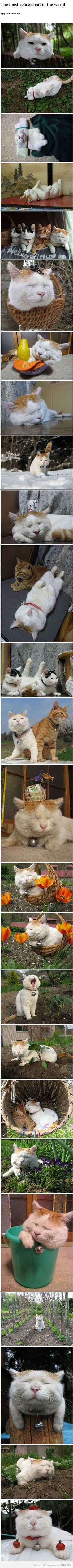 This kitty (the attitude) reminds me of Ray's cat Pumpkin lol.