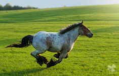 ... - фотографии - lafoto - конники - equestrian.ru