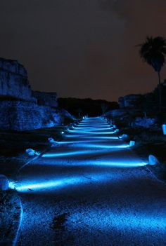 Landscape lighting-this is very cool people!