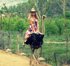 -- Ostrich riding --