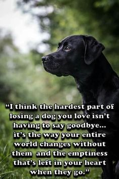 Losing a dog quote