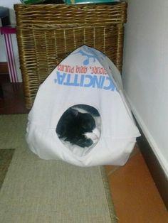 Cuccia per gatto fatta con cartone gruccie di ferro e una maglietta vecchia..lui approva!!