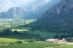 Combine the enjoyment of culinary art and the best local with a along such as Mendoza, Buenos Aires and Santiago de Chile. We've got the best for and Contact us and we'll arrange a bespoke proposal for you! Andes Mountains, Vineyard, Beautiful Places, Tours, Wine, Explore, World, Travel, Bella
