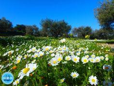wandelvakanties-met-overnachtingen-op-Kreta-griekenland Crete, Golf Courses, Outdoor, Plants, Sandstone Wall, Crete Holiday, Campsite, Round Trip, Nature